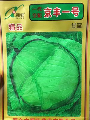 四川省成都市成華區綠甘藍種子 京豐一號甘藍種子,一代雜交,扁圓高產