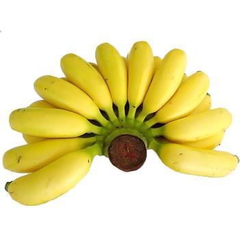秒杀:小米蕉粉蕉约9斤 果园直供 现砍现发 可代发