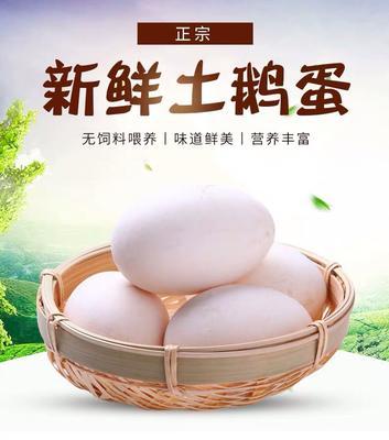 河南省洛陽市孟津縣 鵝蛋農家散養 新鮮大鵝蛋  孕婦10枚生鵝蛋天然去純批發大