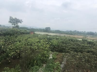 四川省成都市龍泉驛區 魚塘,八畝,果園八畝