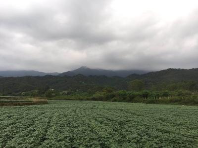 廣東省陽江市陽西縣山地 出租 5年以下 50~100畝