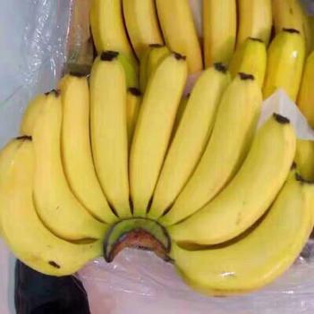 廣西高山甜香蕉帶箱10斤自有基地一件代發
