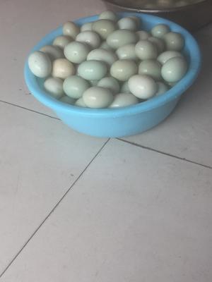 山東省萊蕪市萊城區綠殼鴨蛋 散裝 食用