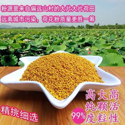河南省许昌市长葛市 荷花粉女人食用花粉