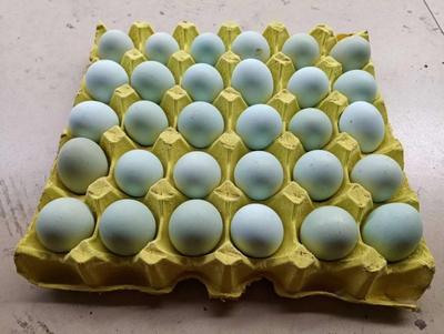 湖南省長沙市雨花區綠殼雞蛋 綠殼蛋
