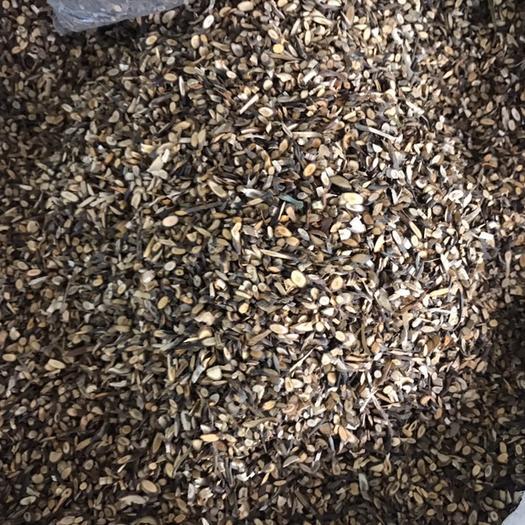 廣西壯族自治區玉林市玉州區 廣西貴港平南本地桂枝,夠含量