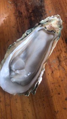 广西壮族自治区北海市海城区 北海生蚝