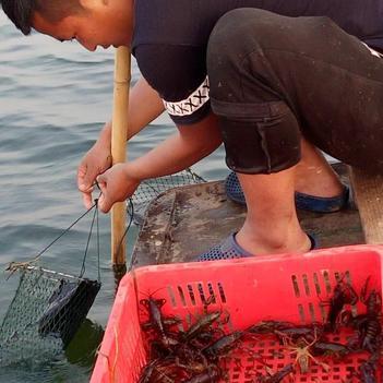 7月9日 特级中等规格小龙虾〈4.6-6.6钱〉17元