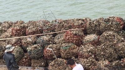 廣東省潮州市饒平縣 汫洲生蠔鮮活牡蠣海產品生蠔肉海鮮燒烤大蠔