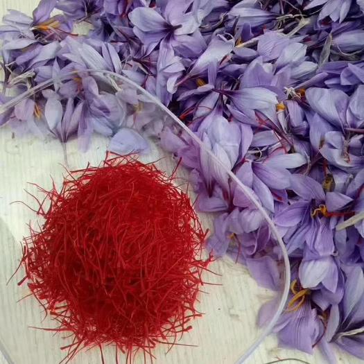 安徽省亳州市谯城区 藏红花种苗,西红花种苗批发,藏红花种球价格