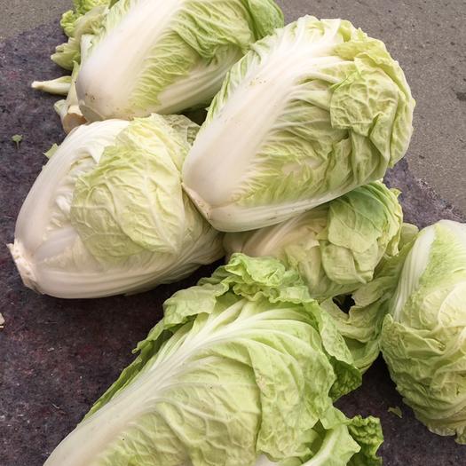 山东省烟台市莱州市黄心大白菜 2~3斤 净菜
