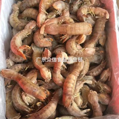 廣東省湛江市霞山區蝦爬子 大量加工生產熟凍爬爬蝦,活蝦精制,條條飽滿,歡迎聯系。