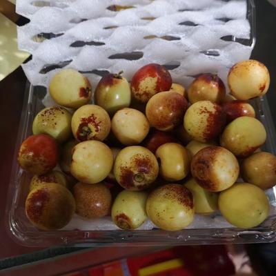 陜西省渭南市大荔縣 陜西大荔冬棗,皮脆可口,貨源充足!