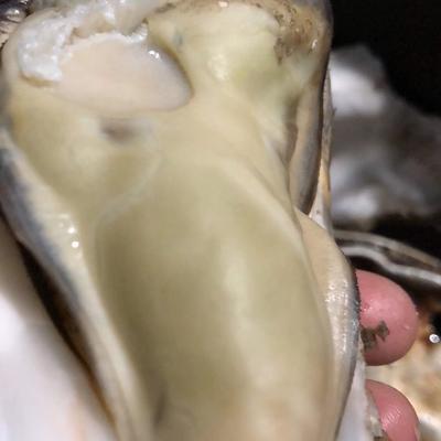 山東省威海市乳山市 乳山正宗三倍體牡蠣