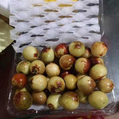陜西省渭南市大荔縣 陜西大荔冬棗,皮脆味甜,貨源充足!