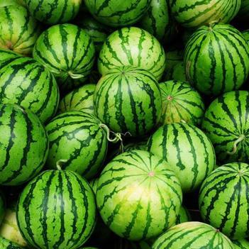 8424西瓜 瓜美味甜