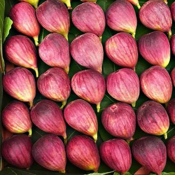 新款紅皮5斤帶箱新鮮無花果水果 品仙奶漿蜜果青皮無花果