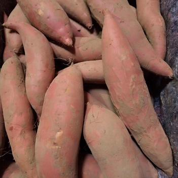 糖心蜜薯烟薯25