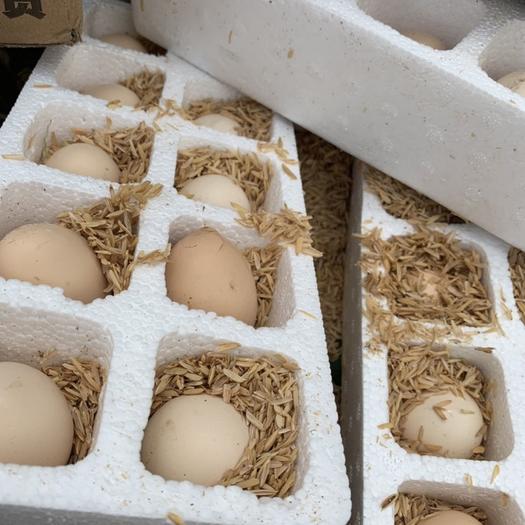 安徽省六安市裕安區 買一送一實發40枚正宗農家散養土雞蛋新鮮柴雞蛋草雞蛋笨雞蛋