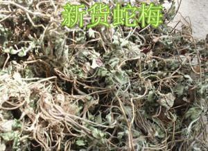 河北省保定市安国市 蛇莓 新货 门店直销 质量保证