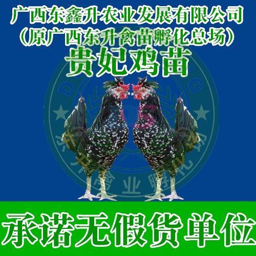 广西壮族自治区钦州市钦南区 贵妃鸡苗——承诺无假货单位