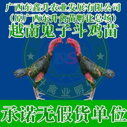 广西壮族自治区钦州市钦南区 斗鸡苗——承诺无假货单位