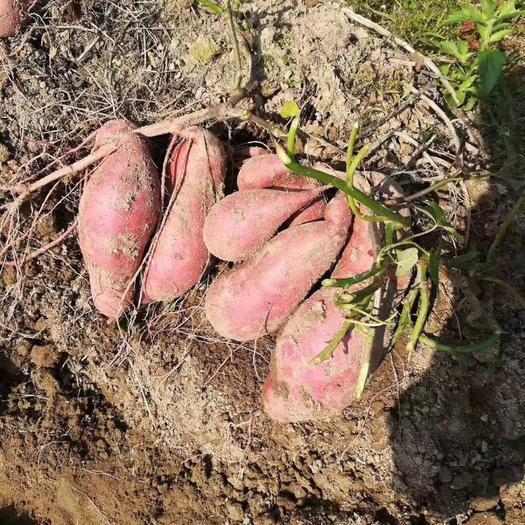 江西省赣州市信丰县 预售10月初西瓜红,自家百亩种植基地