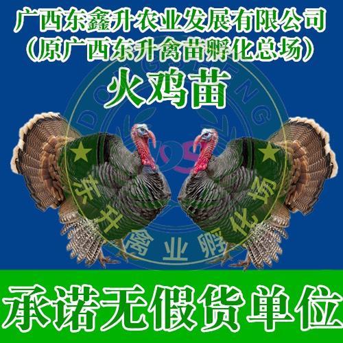 广西壮族自治区钦州市钦南区 贝蒂娜火鸡苗——承诺无假货单位