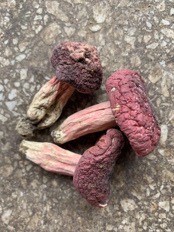 [红菇批发] 2020新正红菇 中菇 颜色好价格155元/斤