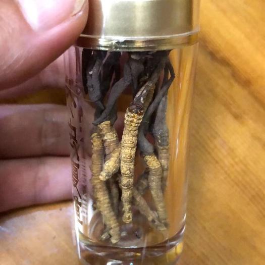 云南省昆明市官渡区 虫草,冬虫夏草,十根一瓶,高海拔 西藏那曲