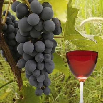 家鄉特產葡萄酒5斤裝