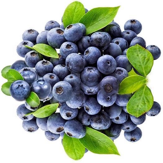 云南省昆明市富民县 蓝莓 云南新鲜蓝莓 现摘现发 特价全场包邮