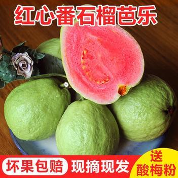 【特价包邮】台湾红心番石榴红心现摘现发新鲜当季水果批发包邮