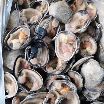 企鵝珍珠貝 天鵝貝 天鵝蛋 凍半殼天鵝蛋