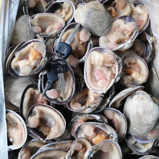 四川省成都市郫都區企鵝珍珠貝 天鵝貝 天鵝蛋 凍半殼天鵝蛋