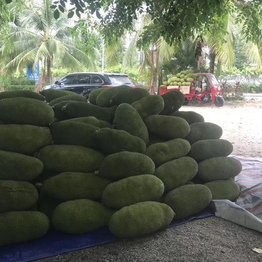 海南省万宁市万宁市海南菠萝蜜 中大果20-40斤精品饱满圆润。大量现货。果坏包赔
