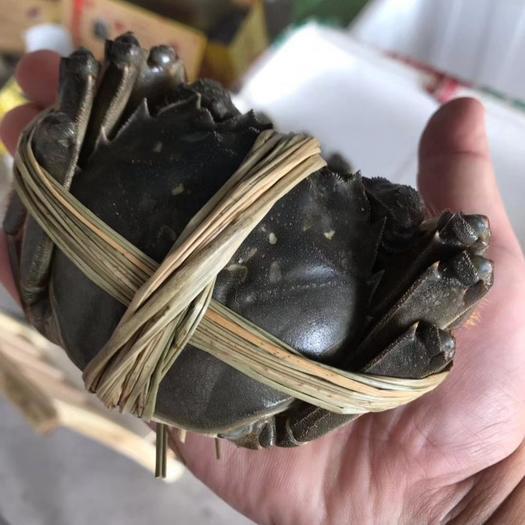 江蘇省泰州市興化市 香草大閘蟹