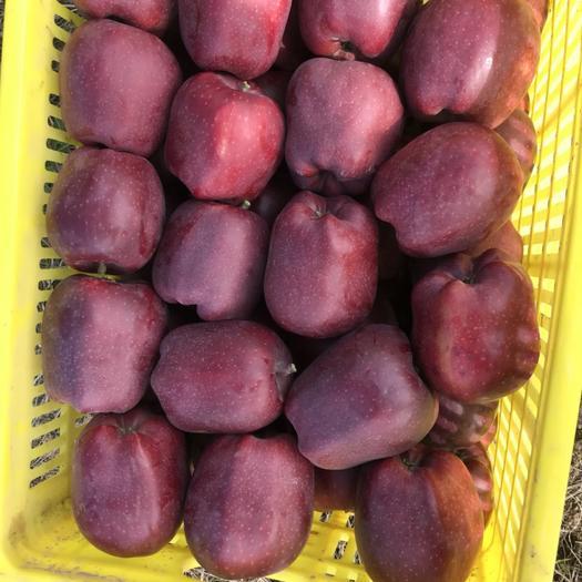 甘肅省天水市麥積區美國蜜脆蘋果 全紅 75mm以上 光果