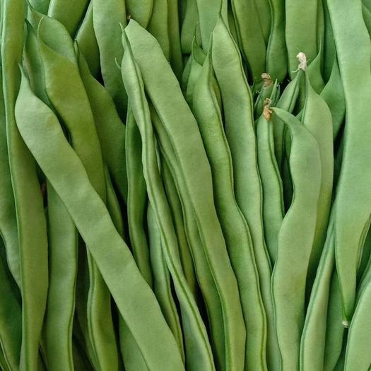 山东省潍坊市寿光市绿龙芸豆 精品扁青芸豆大量上市,质量一流,价格美丽