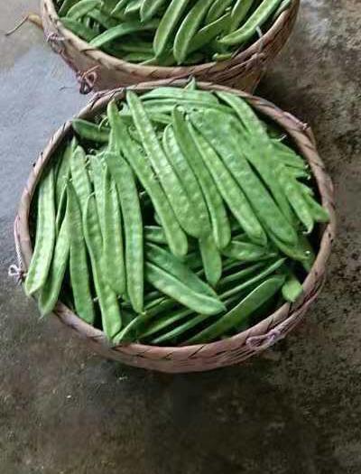 广西壮族自治区贺州市八步区 新鲜刀豆
