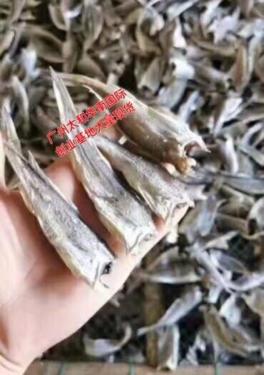 广东省广州市白云区 小黄花鱼