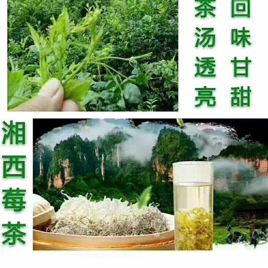 湖南省湘西土家族苗族自治州永顺县茅岩莓茶 好品质,值得你拥有。