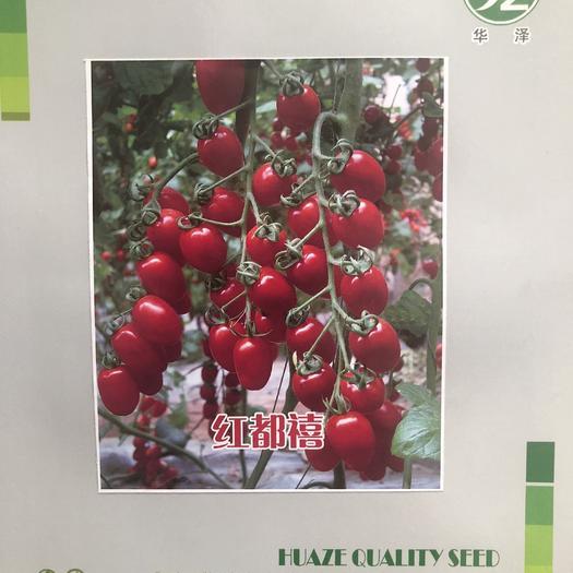 山东省潍坊市寿光市 红都禧,樱桃番茄种子,圣女果种子