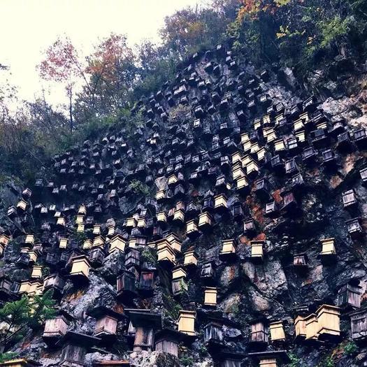 湖北省宜昌市长阳土家族自治县土蜂蜜 塑料瓶装 2年以上 100%