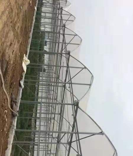 天津市静海区钢管大棚 大棚骨架生产厂家