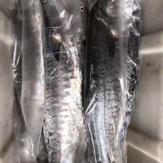 广西壮族自治区北海市海城区 马鲛鱼、鲅鱼 可帮切片真空