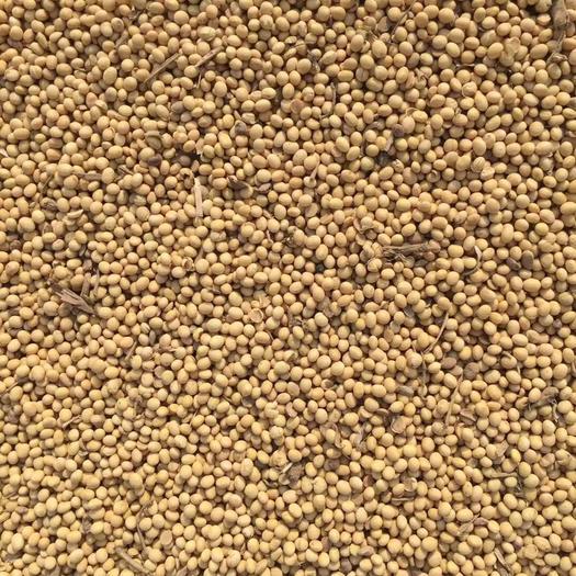安徽省安庆市宜秀区 安徽优质大豆