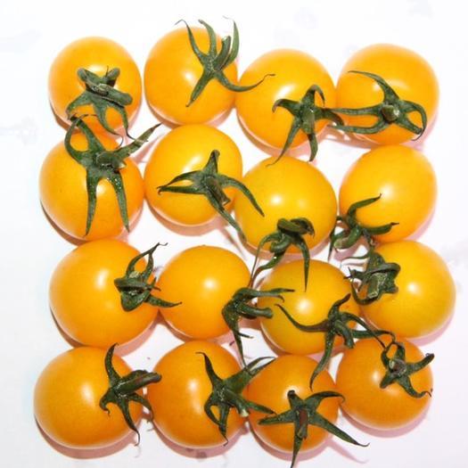 山东省潍坊市寿光市 黄丹妮,黄樱桃番茄种子