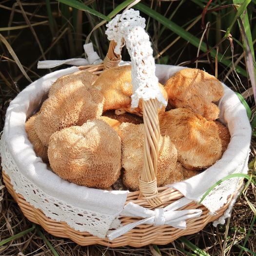 福建省宁德市蕉城区 猴头菇古田食用菌干货特产养胃菌菇煲汤送礼