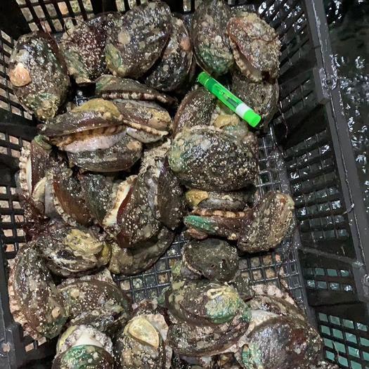 福建省漳州市漳浦县 活冻新鲜10头规格鲍鱼,支持全国各地发货